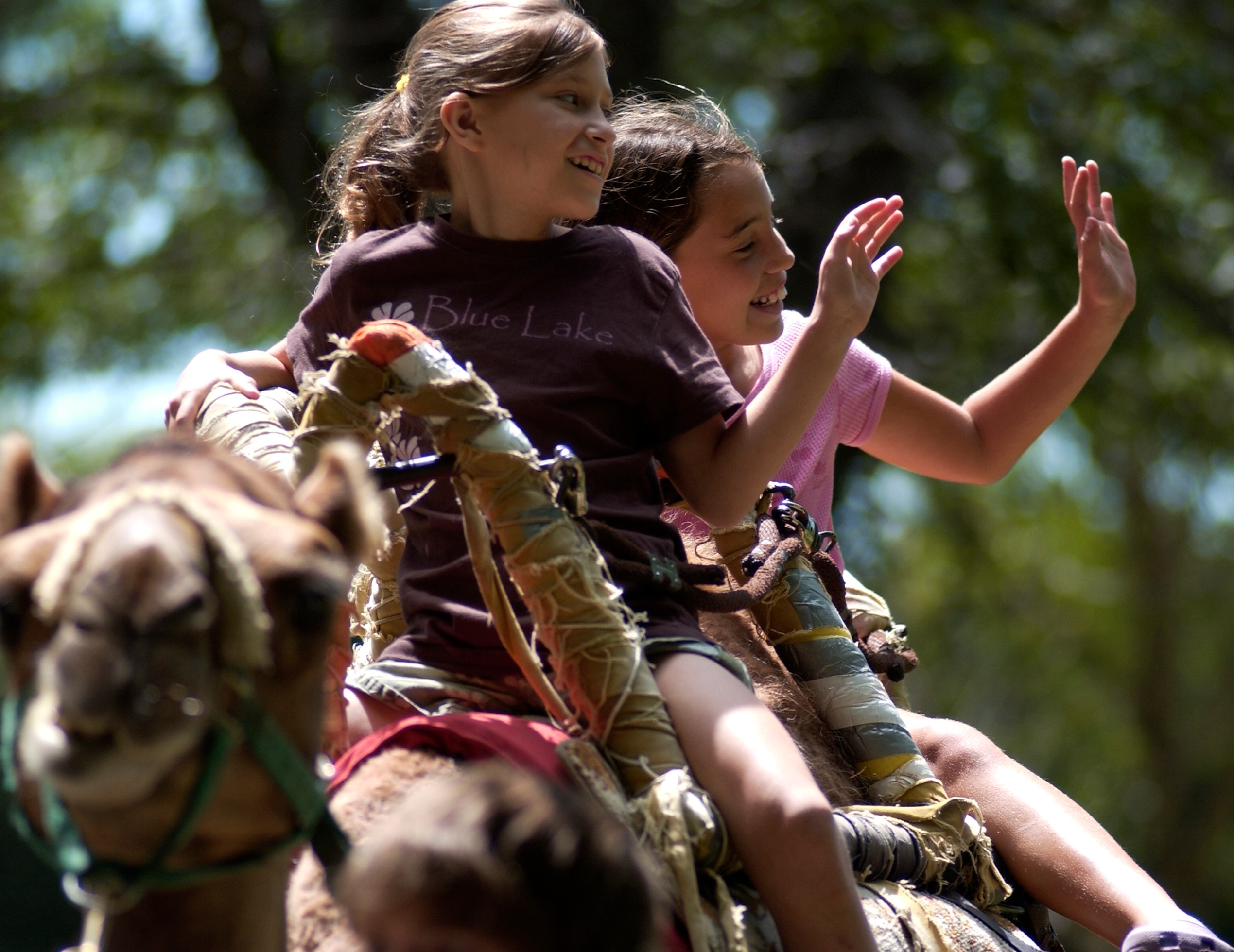 Animal Encounters - Camel Rides