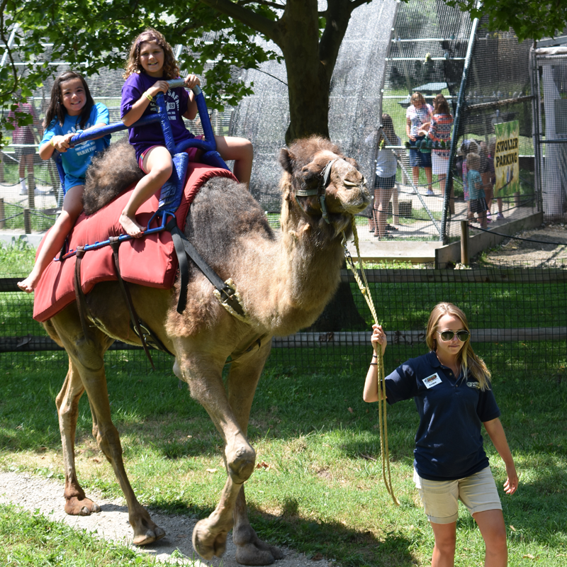 2 girls riding a camel with trainer