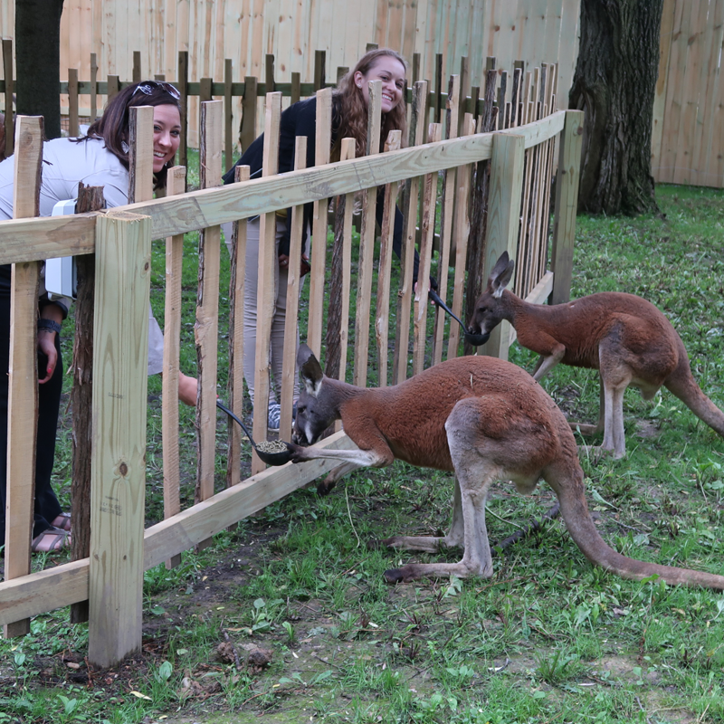 two girls feeding red kangaroo