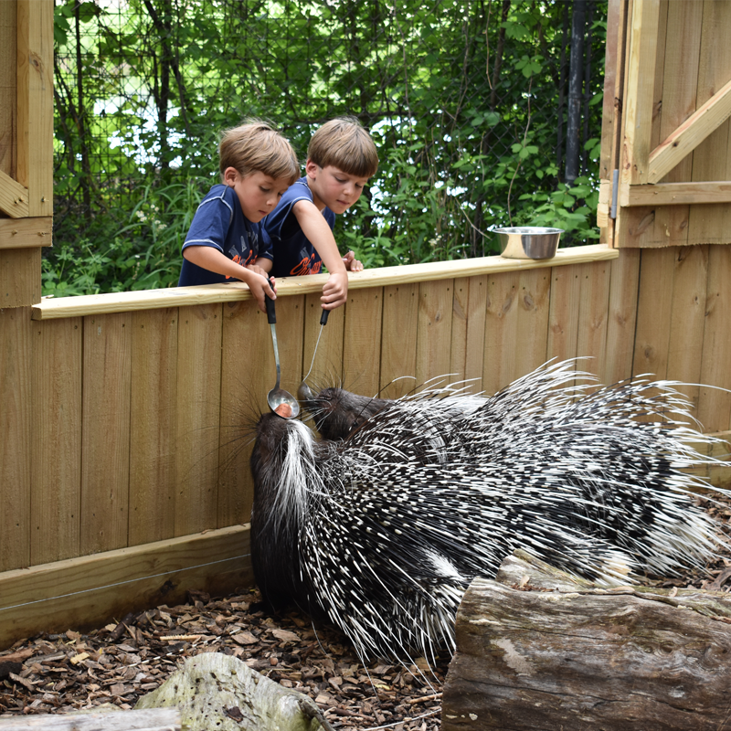 kids feeding porcupines