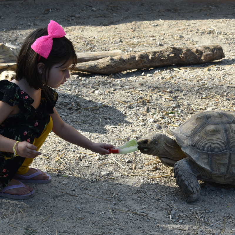girl feeding turtle