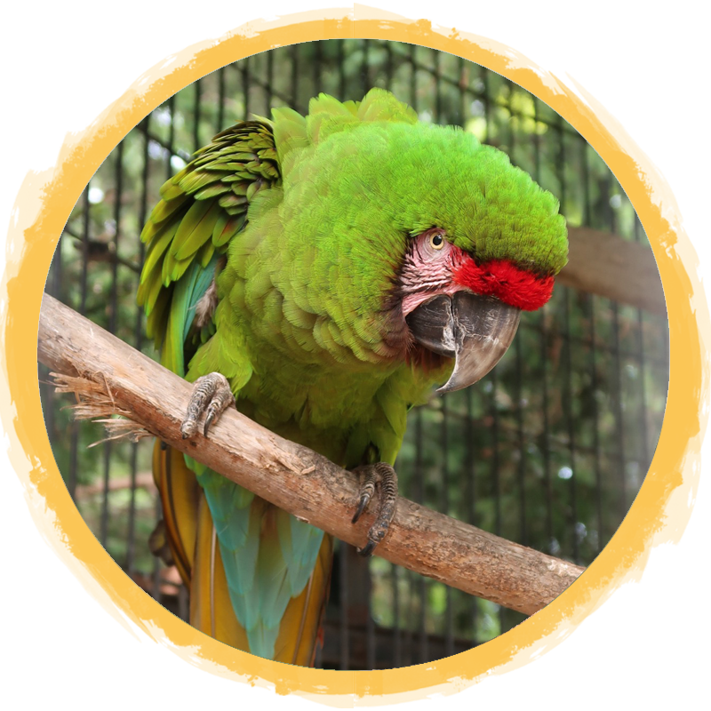 military macaw circle