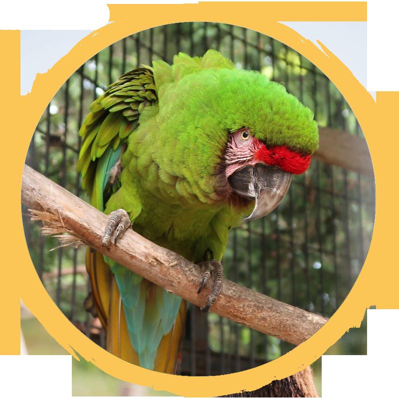 military macaw circle