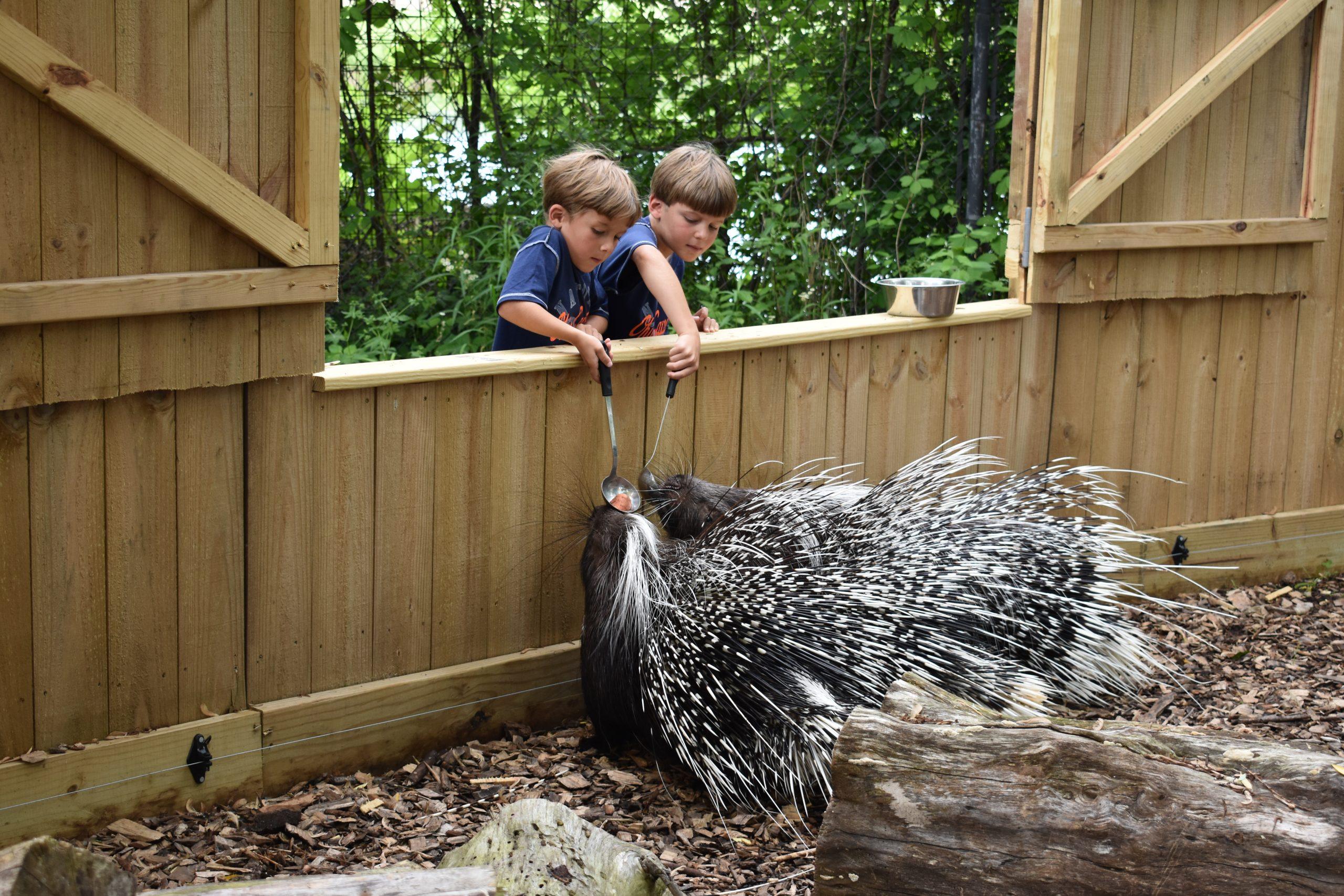Animal Encounters - Feeding Porcupines