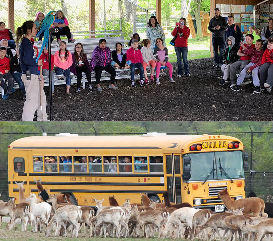 Kids learning and school bus drive-thru safari park collage